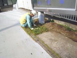 福岡県春日市 エクステリア ガーデニング 太陽ハウジング 雑草アタック 除草作業の写真です