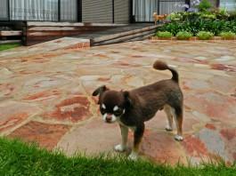 わんちゃん5匹が自由に戯れる素敵なガーデン。ペットと過ごすお庭です。
