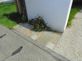 門柱の足元には可愛い花が寄り添います。ベルストーンも美しいですね。