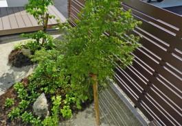 フェンスが木目調なので、前に植栽を置くと、全体のバランスが良くなります。
