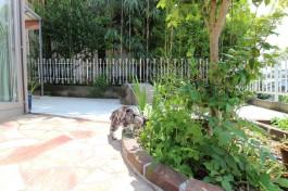 花壇を探索中の猫